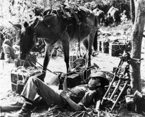 mule and man sleeping